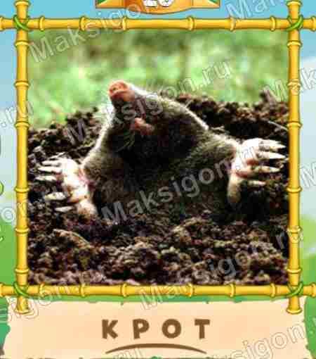 Ответы на игру 4 фотки 1 Слово новый картинка