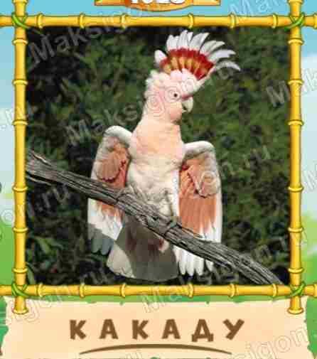 кабана троплением птица говорун слово из 6 Общероссийский классификатор
