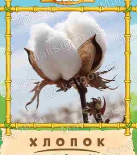 также легче птица говорун слово из 6 пасьянс одно