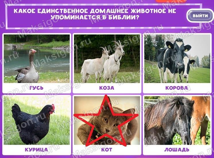 Ответы к игре В мире животных 2 в Одноклассниках и Вконтакте - Ответы на игры